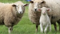 parables of the lost sheep and lost coin transforming mission