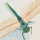 Dragon Fly Seeing Jesus in the Ordinary with Transforming Mission