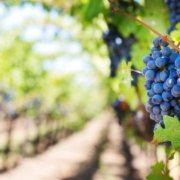 Who Owns the Vineyard? There's a Wideness in God's mercy with Transforming Mission
